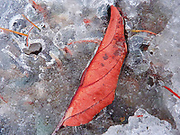 &quot;AUTUMN LEAF&quot;<br />