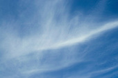Cirrus clouds.