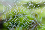Spider Web on green