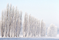 "Images from the Book Journey Through Colour and Time, ""Frozen Trees"" Germany at the time it minus18 degrees."