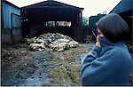 21 day old carcases of Robert Hext's dairy herd in Chulmleigh, Devon with suspected foot and mouth disease His herd was killed on a  contiguous cull however it  was later found out that his herd was neither contiguous and that the farm that was supposed to be infected with foot and mouth  infact tested negative..