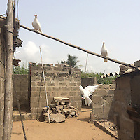 Togo - Baguida. White pigeons seen at the Voodoo priest's house, they are often sacrificed in Voodoo ceremonies. <br /> The destruction of shrines, fetishes and cemeteries caused by sea level rise is having a profound impact on the culture of locals, who fear their past and traditions might be wiped away.