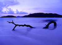 Driftwood at Cinnamon Bay.Virgin Islands National Park.St. John, U.S. Virgin Islands