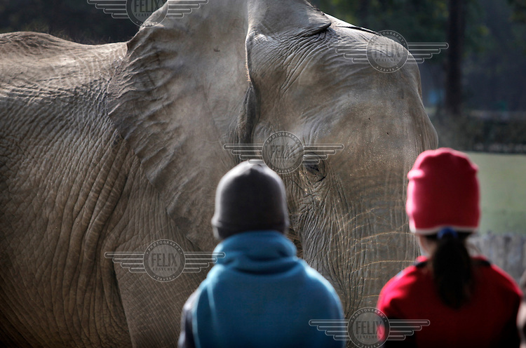 Two children come eye to eye with an elephant at Delhi Zoo.