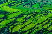 Nepal-Kathmandu Valley-Misc.