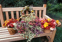 Garden bench with dried flowers strawflowers Xerochrysum bracteatum, baskets, statice Limonium, wreath, outdoors, picked and harvested arrangments of blooms that keep everlastings