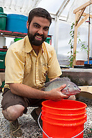 Justin Nadeau holds a 1.5 lb Tilapia that he raised in an aquaponic system.
