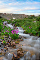 I had hiked up to shoot Colorado wildflowers at sunrise. After the sun appeared and then disappeared behind the clouds, I moved to a small snow-fed stream to work that area. I found this little patch of pink Parry's Primrose with a soft pastel sky in the background and couldn't resist seeing what sort of Colorado images I could take home with me.<br />