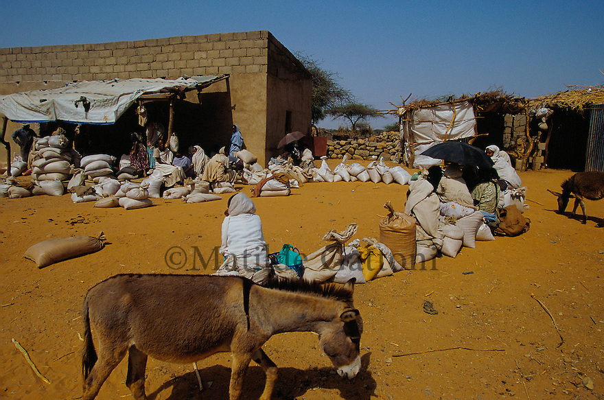 Eritrea - Debub- Villagers queing at the mill for weekly food distribution. As a result of 30 years of war for independence against Ethiopia (from 1961 to 1991) and another 3 years from 1997 to 2000, there are 50,000 Eritreans currently living in internally displaced (IDP) camps throughout the country. These IDPs have fled three times in the last 10 years, each time because of renewed military conflict. They lived in relatives' homes when lucky enough, but mostly, the fled to the mountains, where they attempted to do what Eritreans do best, survive. Currently there is no Ethiopian occupation in Eritrea, but landmines prevent the IDPs from finally going home. .It is estimated that every Eritrean family lost two or three members to the war which makes the reality of the current emergency situation even more painful for Eritreans worldwide. Currently, the male population has been decreased dramatically, affecting the most fundamental socio-economic systems in the country. Among the refugee population, an overwhelming majority of families are female-headed, severely affecting agricultural production. For, IDPs in particular, 80% of households are female-headed..The unresolved border dispute with Ethiopia remains the most important drawback to Eritrea's socio-economic development, as national resources (human and material) continue to be prioritized for national defense. Eritrea is vulnerable to recurrent droughts and variable weather conditions with potentially negative effects on the 80 percent of the population that depend on agriculture and pastoralism as main sources of livelihood. The situation has been exacerbated by the unresolved border dispute, resulting in economic stagnation, lack of food security and increased susceptibility of the population to various ailments including communicable diseases and malnutrition..