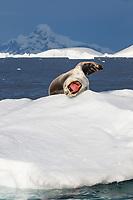 Port Charcot, Antarctic Peninsula.