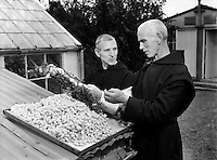 Mount St Joseph, Roscrea, Special, Fr Dermot Coleman (left), Silk Spinning - Special for Sunday Express.02/09/1954