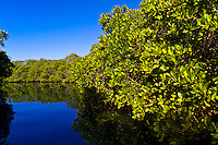 Mangroves (salt marsh) near Bahia Amortajada, Isla San Jose, Sea of Cortes, Baja California Sur, Mexico