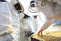 France. Penitentiary of Le Havre. The opening of a hive by the professional beekeeper, Philippe Cordier, who has set up 4 hives in the prison since 2012. For him, his civic action, free of charge, is part of his commitment to the environment and humanity.///rance. Centre Pénitancier du Havre. Ouverture d'une ruche par l'apiculteur professionnel, Philippe Cordier qui a installé 4 ruches dans la prison depuis 2012. Sa démarche citoyenne, gracieuse, s'inscrit pour lui dans son engagement pour l'envirronement et l'humanité.