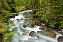 North Fork Cascade River, Mount Baker-Snoqualmie National Forest, North Cascades, Washington.