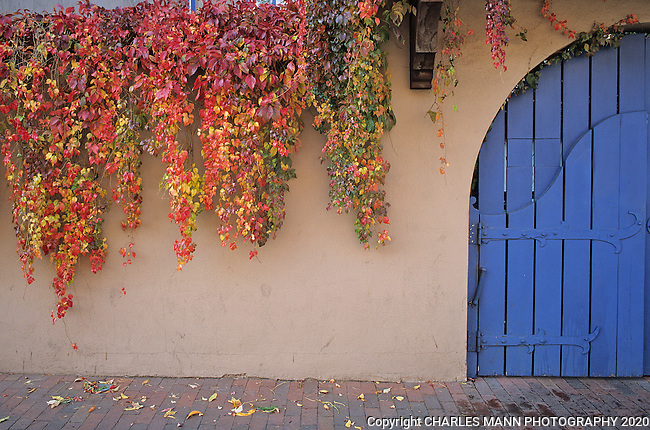 A virginia creeper in autumn colors and a blue gate create a European ambiance at the St. Francis Hotel on Water Street in Santa Fe, New Mexico.