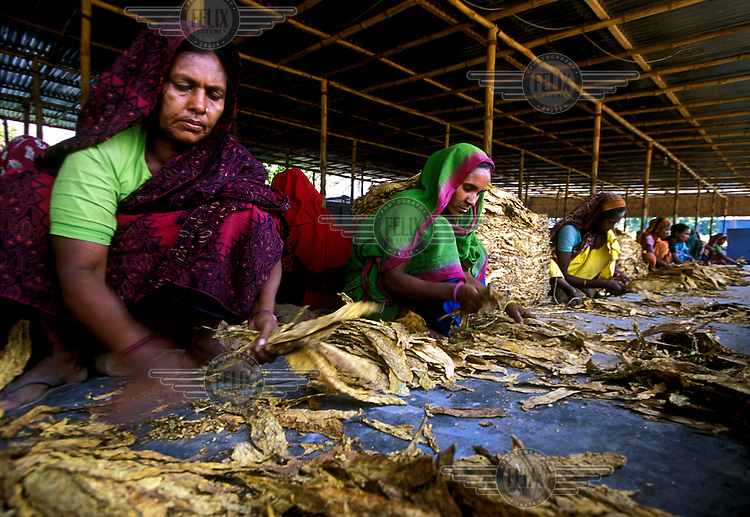 Women working in a tobacco factory.