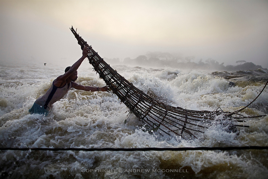 A fisherman checks a basket at Wagenia Falls (or Boyoma Falls) in the middle of the Congo River, near Kisangani, DR Congo. The explorer H.M. Stanley in 1877 described this last cataract, of the then Stanley Falls, as a 'tumultuous rush'. The fishing here is some of the most difficult as fishermen must battle the full force of the flow, and it is here that the Lualaba River becomes the Congo river.