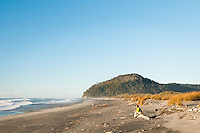 Hiker on Three Mile Beach with pingao and sand dunes, Westland Tai Poutini National Park, UNESCO World Heritage Area, West Coast, New Zealand, NZ