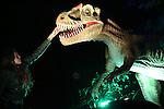 Foto: VidiPhoto<br /> <br /> ARNHEM - Voor de laatste keer trekken duizenden bezoekers dit weekend langs de 25 prehistorische monsters van Burgers' Zoo in Arnhem. 23 Dagen lang hielden de dinosaurussen het Arnhemse dierenpark in hun greep: en met succes! Tienduizenden extra gasten kwamen op het spektakel in de herfstvakantie af. Dino's in een dierentuin: op zich geen nieuwe vondst, maar wel de wijze waarop Burgers' Zoo het evenement heeft vormgegeven. Zeer gedetailleerd uitgevoerde dinosaurussen werden voorzien van moderne bewegingssensoren en geluidsinstallaties, waardoor de reptielen al brullend, happend en staart zwiepend zeker voor de jongste bezoekers levensecht overkwamen. Speciaal voor het Arnhemse dierenpark werden de meterslange prehistorische reptielen in de Chinese provincie Sichuan ontworpen en gemonteerd. Het grootste exemplaar was ruim zeven meter lang. Ondanks hun robuuste uiterlijk, bestaan de figuren uit een zeer flexibele, zachte kunststof, waardoor de dinosaurussen levensecht en soepel kunnen bewegen. Na een lange zeereis vanuit China via de Rotterdamse haven en een aansluitend containertransport over de snelweg arriveerden de dinosaurussen half oktober in Arnhem. Zondag 1 november om 21.00 uur eindigt het succesvolle evenement in Burgers' Zoo.