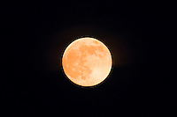 The super moon is seen from a state park in New Jersey, June 23, 2013, Photo by Eduardo Munoz Alvarez / VIEWpress.