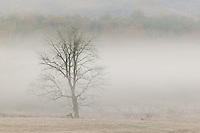 Early morning fog in Cades Cove, Great Smoky Mountains National Park
