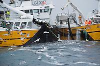 Fishing for herring, Moere coastline, Norway.Model release by photographer