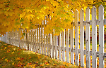 Idaho, North, Coeur d'Alene. A white picket fence immersed in Autumn leaves.