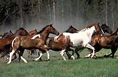 Horses running Montana