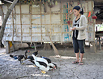 A woman feeds her ducks in the Cambodian village of Pheakdei.