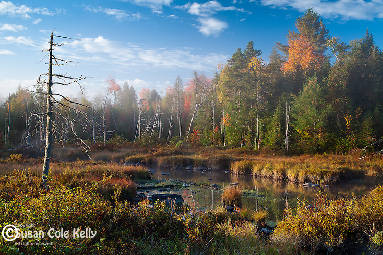 Mud Brook near Moosehead Lake in Piscataquis County, ME, USA