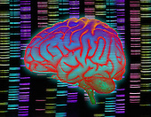 Biomedical illustration of the human brain superimposed over a DNA sequencing gel