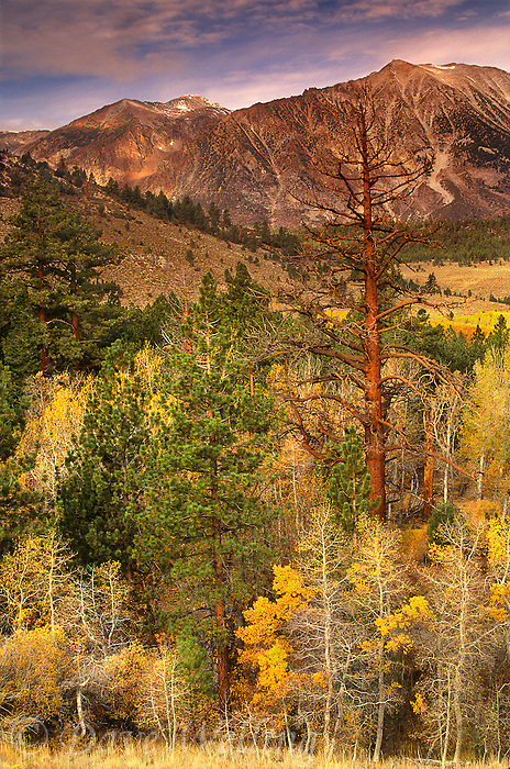 742900130 fall color brightens the high sierras near lee vining canyon in mono county california