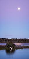 Lake Mahinapua near Hokitika at full moon with Kotuku, white heron, West Coast, South Westland, New Zealand, NZ