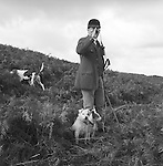 The Blencathra Foxhounds.   Barry Todhunter, the huntsman, gathers up the hounds before recasting. His two working terriers always accompany him. He celebrated 30 years with the Blencathra Foxhounds in 2004, first as whip and then as huntsman, and is only the seventh huntsman since1862. .Hunting with Hounds / Mansion Editions (isbn 0-9542233-1-4) copyright Homer Sykes. +44 (0) 20-8542-7083. &lt; www.mansioneditions.com &gt;