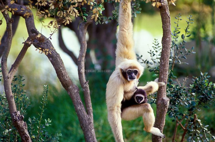 Mammals 10 | Christoph...