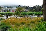 Academy of Sciences, Golden Gate Park