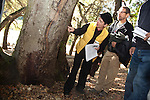 Workshop participants investigate the toll of Sudden Oak Death on a tree in Foothills Park.  A danger to park users and trees and nature around it, the oak could fall any time.