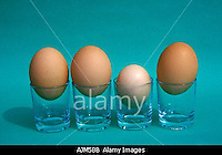 AJM58B Hen s eggs of different size Symbolic Not all are born equal Or Some are much smaller than the crowd