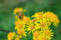 Bee foraging.