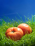 Two organic field tomatoes in green grass under blue sky artistic food still life