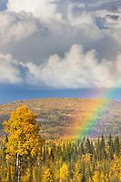 Rainbow over the autumn boreal forest in the Goldstream Valley area, Fairbanks, Alaska.