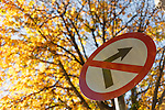 Autumn in Ireland, 2012: A roadsign for no right turn contrasts it's bright red colour against the backdrop of golden leaves in the trees behind