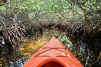 Pig Pine Kayak Adventures, Besitzer und Tourguide Bill Keogh, Florida Keys Kayaking and Kayak Tours, Big Pine Keys..Mangrovenwald..Florida 2009..Foto © Stefan Falke.