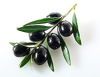 Fresh black olives on an olive branch photos, pictures & images.