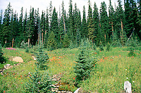 TREES<br /> Alpine Meadow with Wild Flowers<br /> British Columbia, Canada