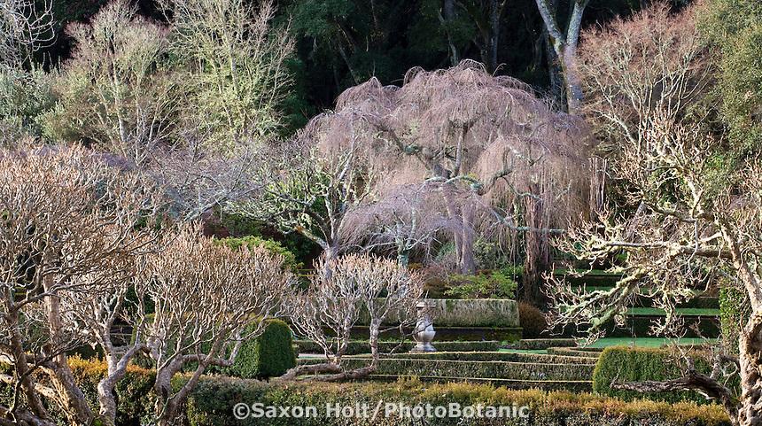 Winter deciduous trees, well pruned in Filoli Wall Garden