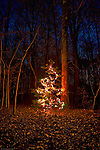 Outdoor Christmas tree and lights in a rural wooded area.