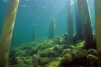 Underwater Scene-Old pier pilings, Lake Michigan<br /> <br /> ENGBRETSON UNDERWATER PHOTO