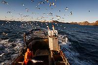 Boat captain and owner is Johannes Sigurdsson.blamannehf@simnet.is.+354 481 3307.Address: Nyjabaejarbraut 10.900 Vestmannaeyjar Islands..Other guy in Gilnet boat is:.Audunn Jorgens.+354 849 7873.Stremburata IS.900 Vestmannaeyjar Islands..My fixer for Vestmannaeyjar Islands is Arni Johnsson  +354 894 1300..Main Contact for Iceland is fixer Friddi Helgason, email kvik@centrum.is   phones:  +354 895 6001 and 562 4703