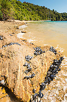 Orange sand, mussels and rocks in Governors Bay in Marlborough Sounds, Nelson Region, Marlborough, South Island, New Zealand